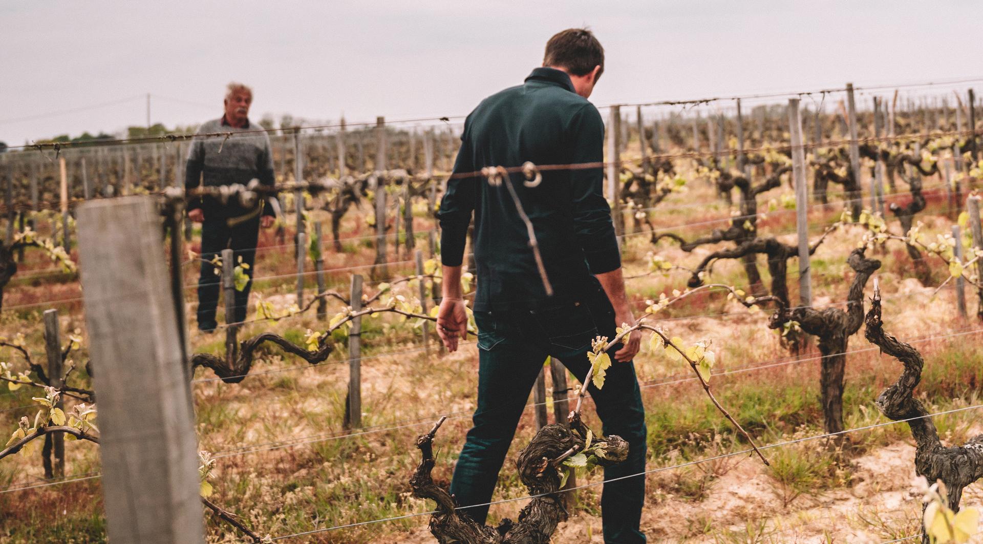 Pere et fils dans les vignes du Chgâteau de Côts